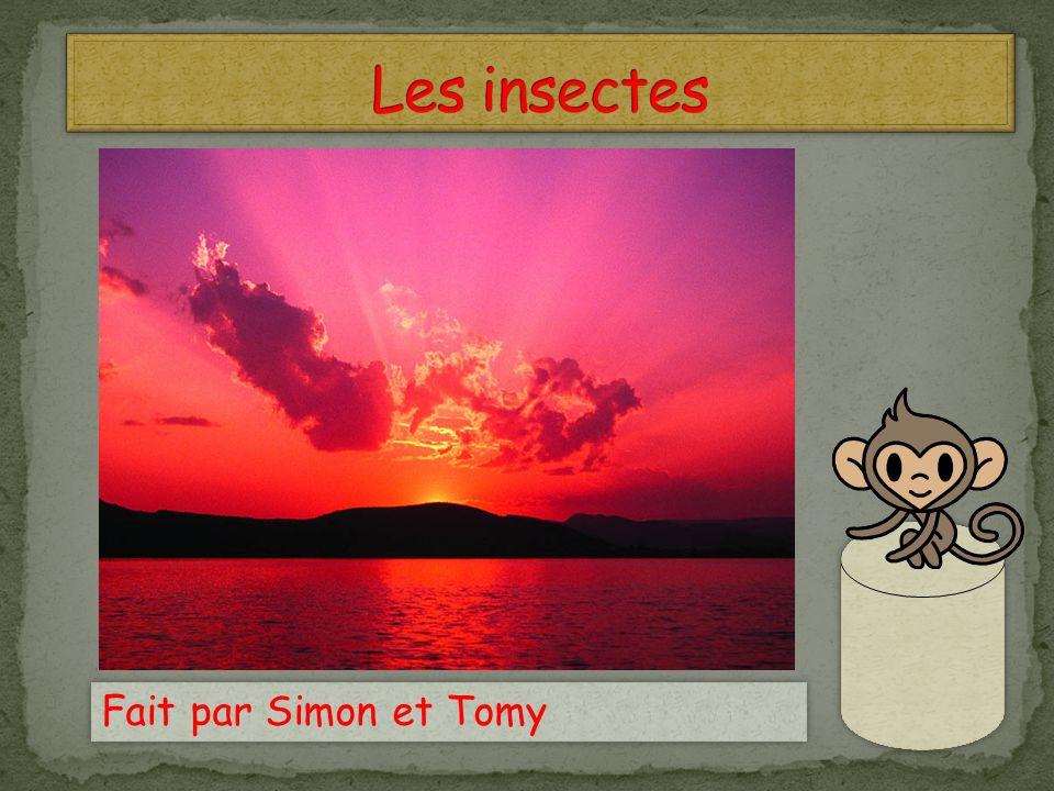Les insectes Fait par Simon et Tomy