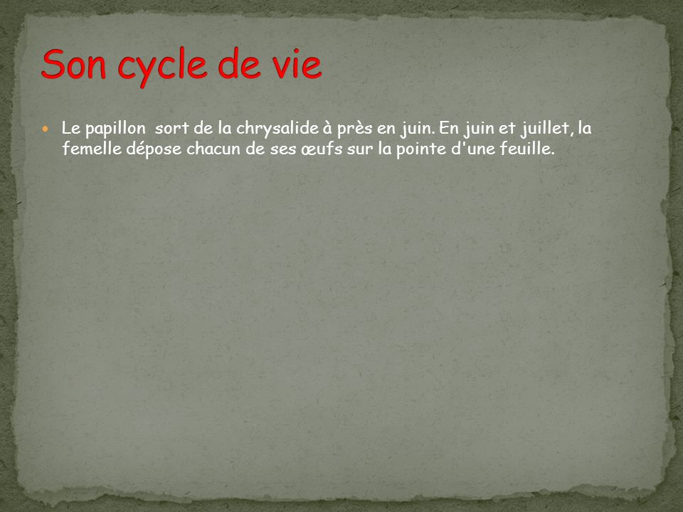 Son cycle de vie