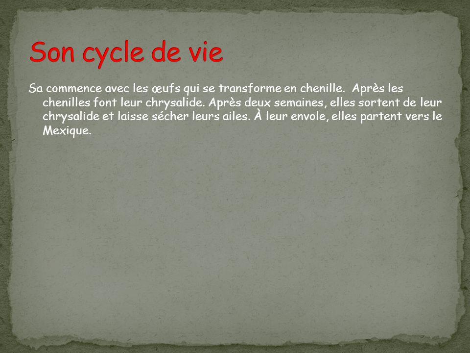 Son cycle de vie