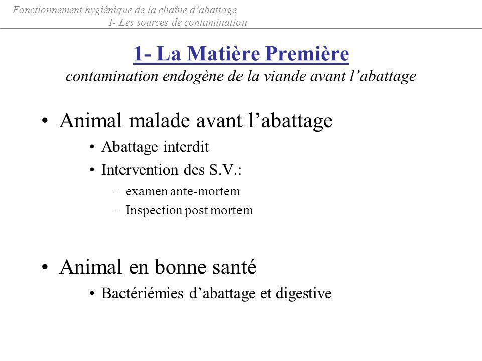 Animal malade avant l'abattage