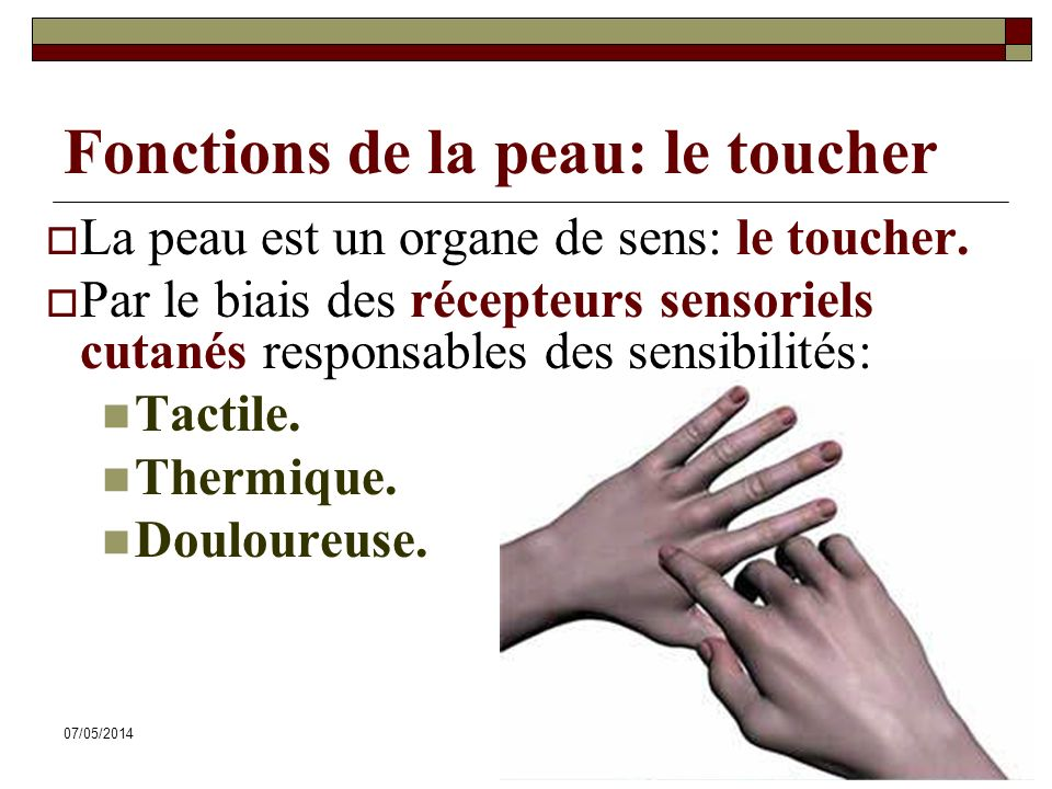 Fonctions de la peau: le toucher