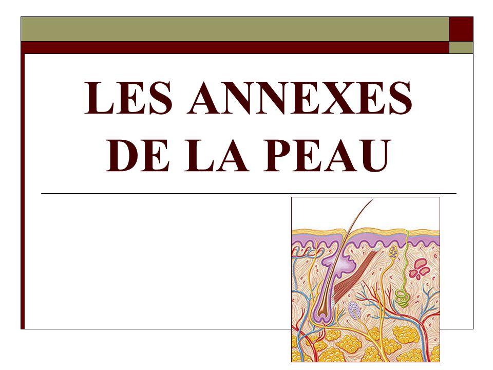 LES ANNEXES DE LA PEAU