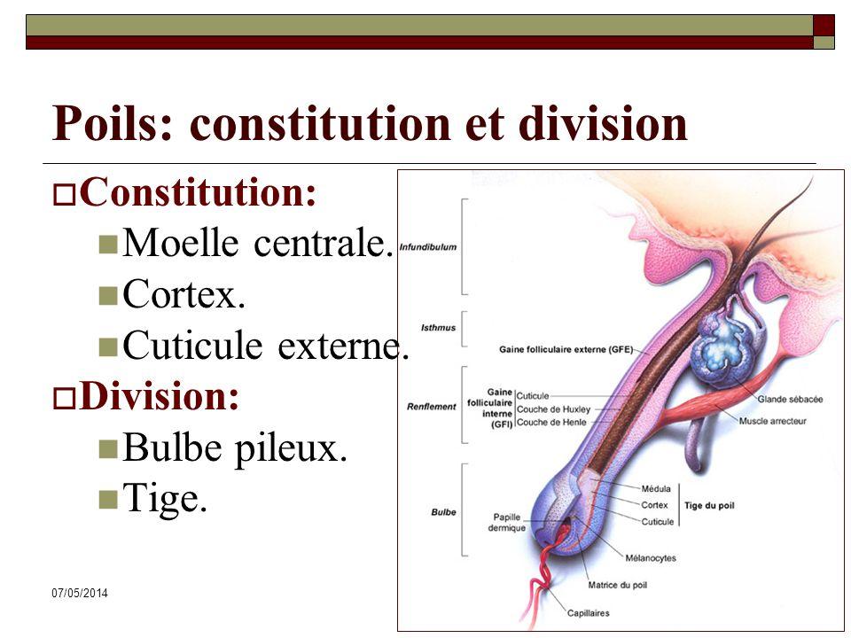 Poils: constitution et division