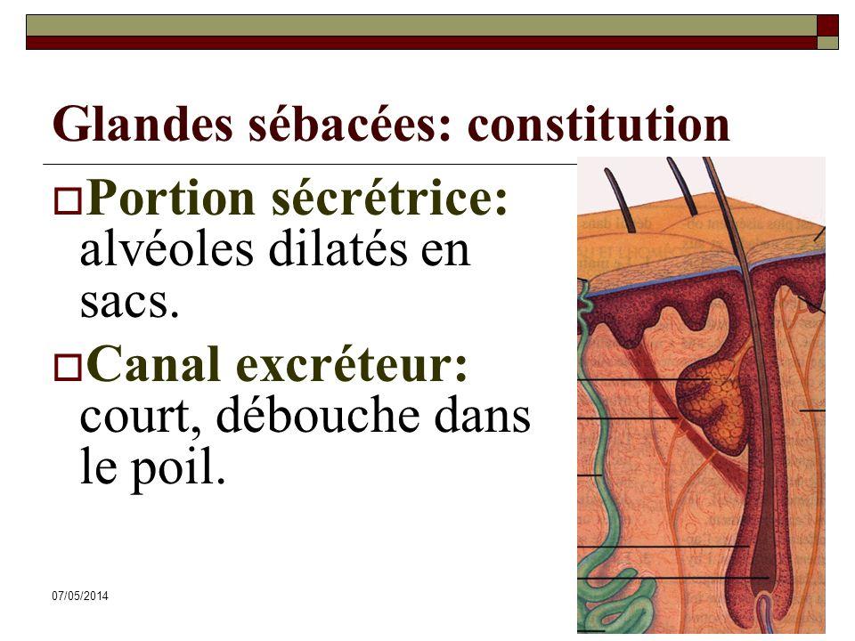Glandes sébacées: constitution