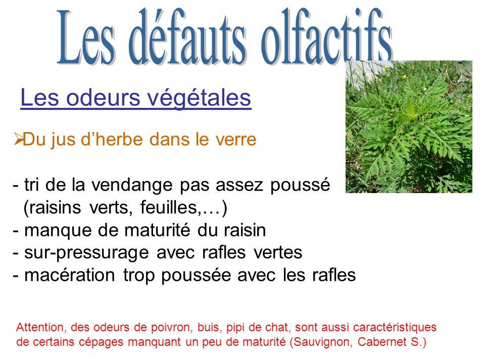 Les odeurs végétales Les défauts olfactifs