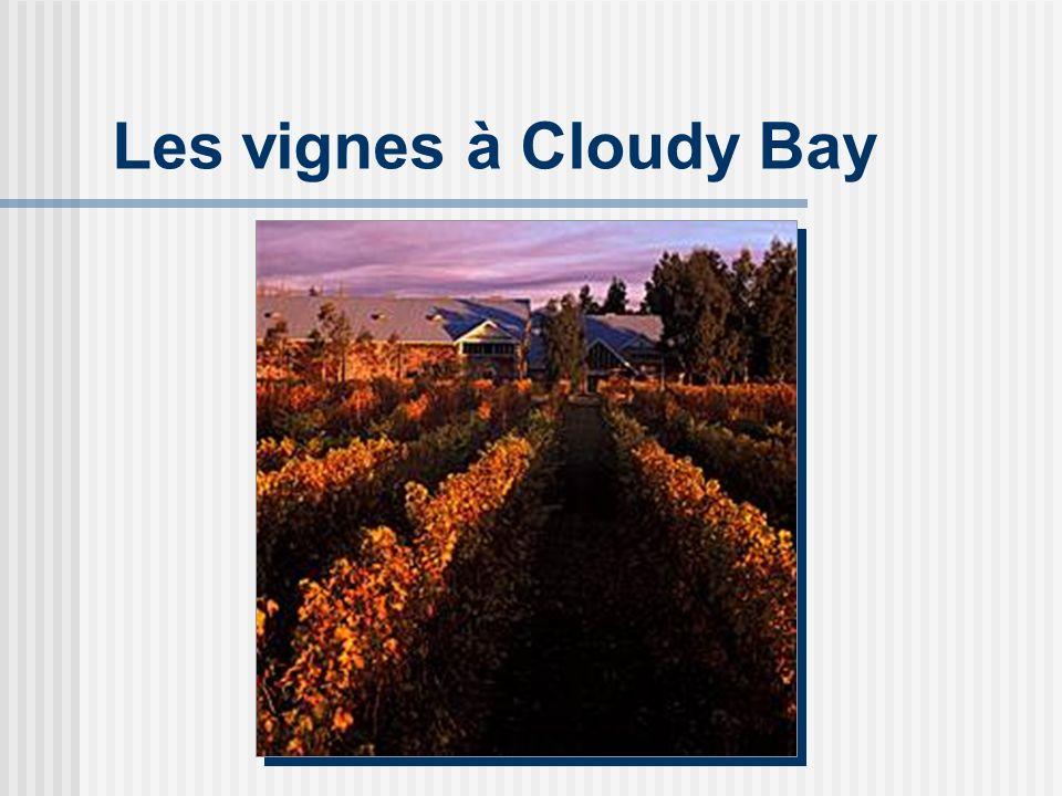 Les vignes à Cloudy Bay