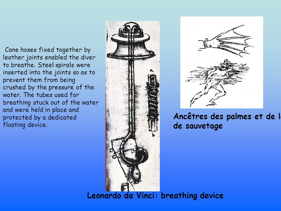 Ancêtres des palmes et de la bouée de sauvetage