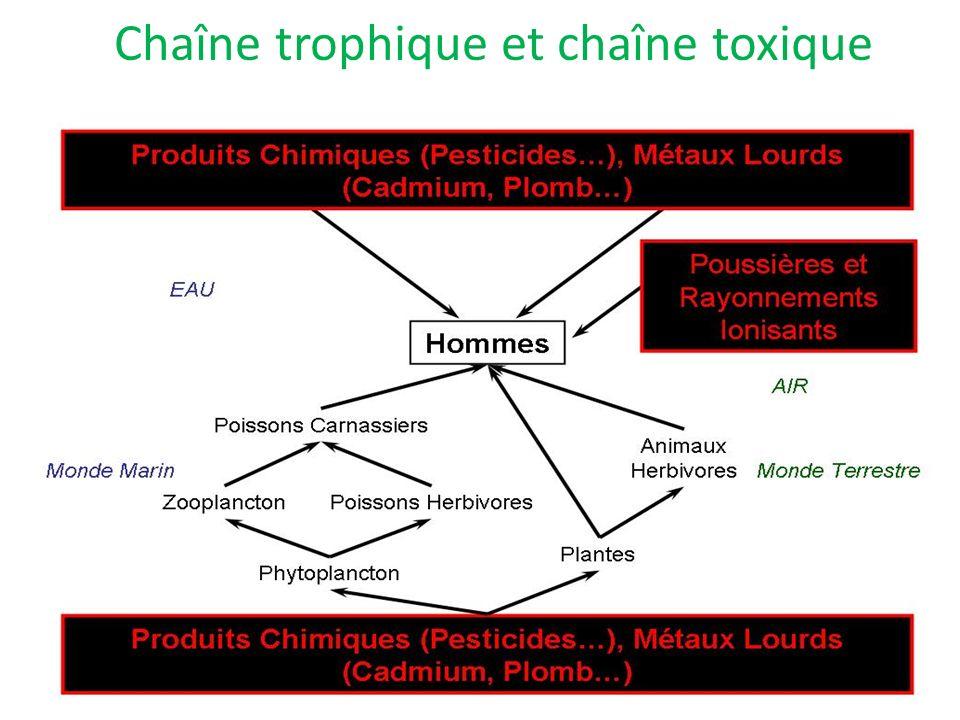 Chaîne trophique et chaîne toxique