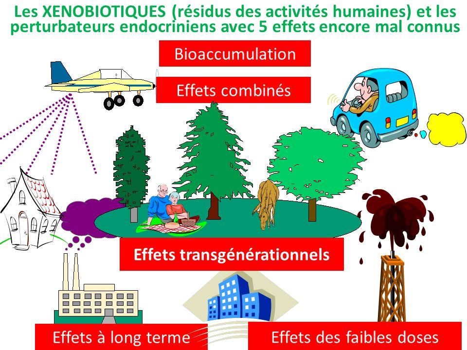 Effets transgénérationnels