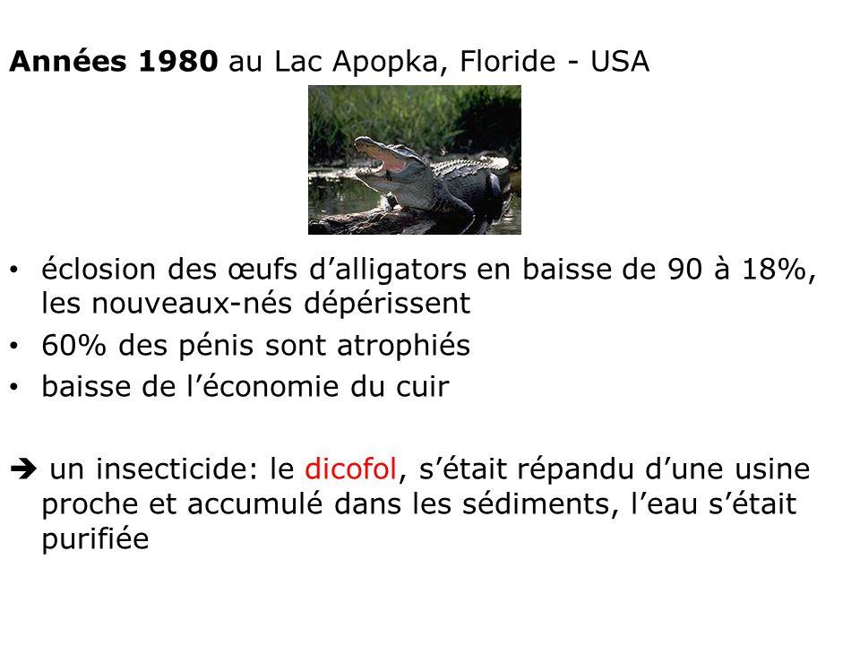 Années 1980 au Lac Apopka, Floride - USA