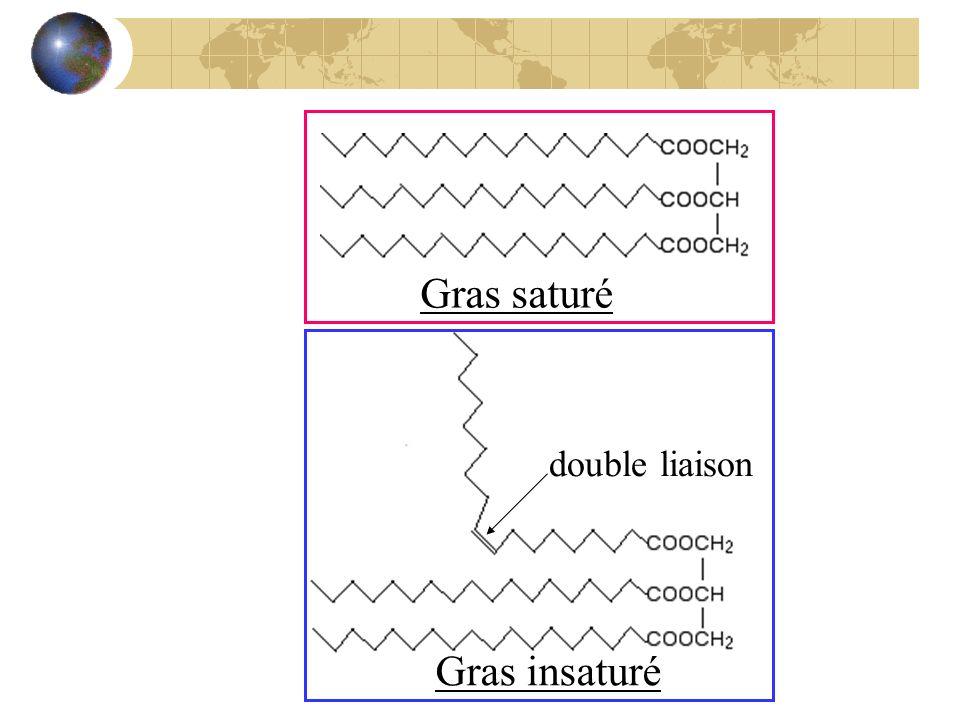 Gras saturé double liaison Gras insaturé
