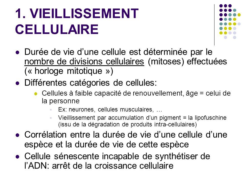1. VIEILLISSEMENT CELLULAIRE