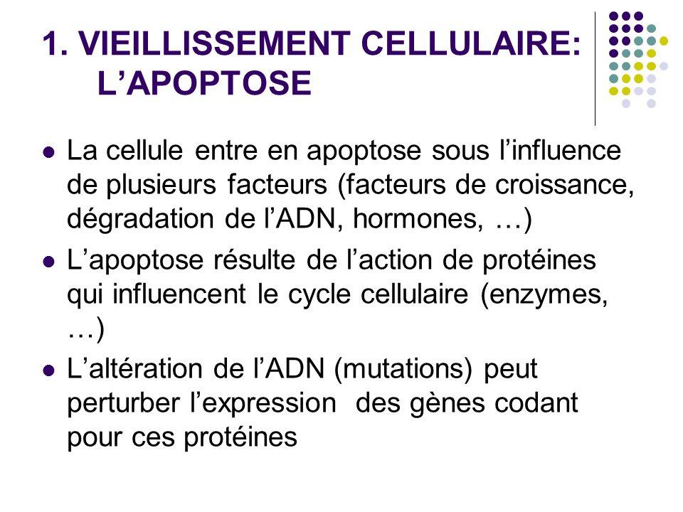 1. VIEILLISSEMENT CELLULAIRE: L'APOPTOSE