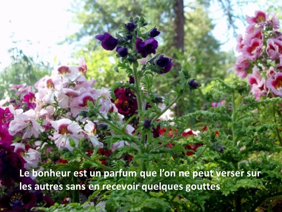 Le bonheur est un parfum que l'on ne peut verser sur les autres sans en recevoir quelques gouttes