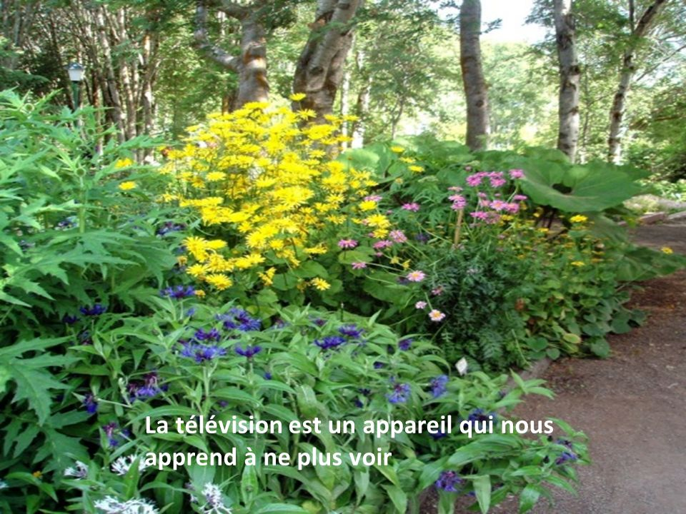 La télévision est un appareil qui nous apprend à ne plus voir