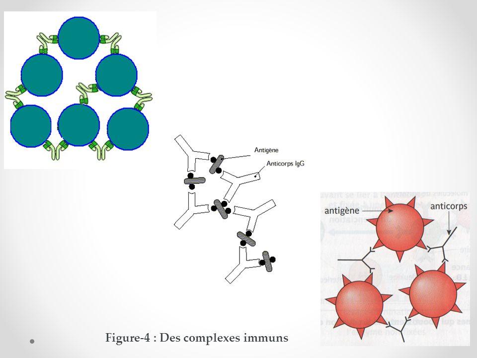 Figure-4 : Des complexes immuns