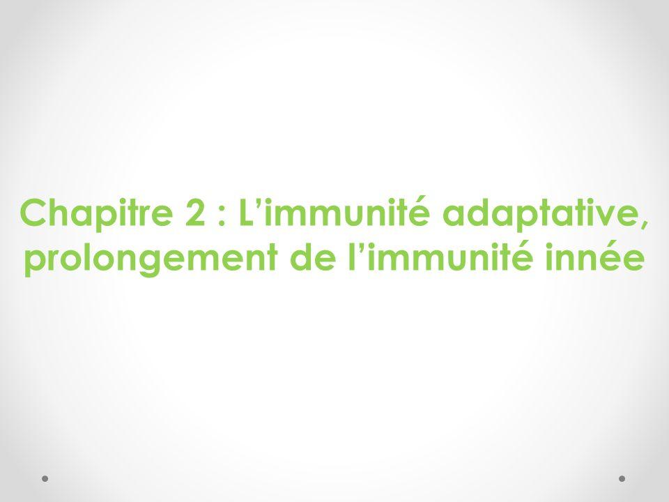 Chapitre 2 : L'immunité adaptative, prolongement de l'immunité innée