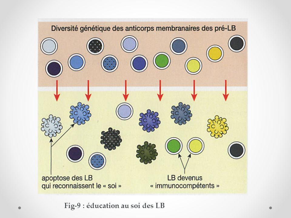 Fig-9 : éducation au soi des LB