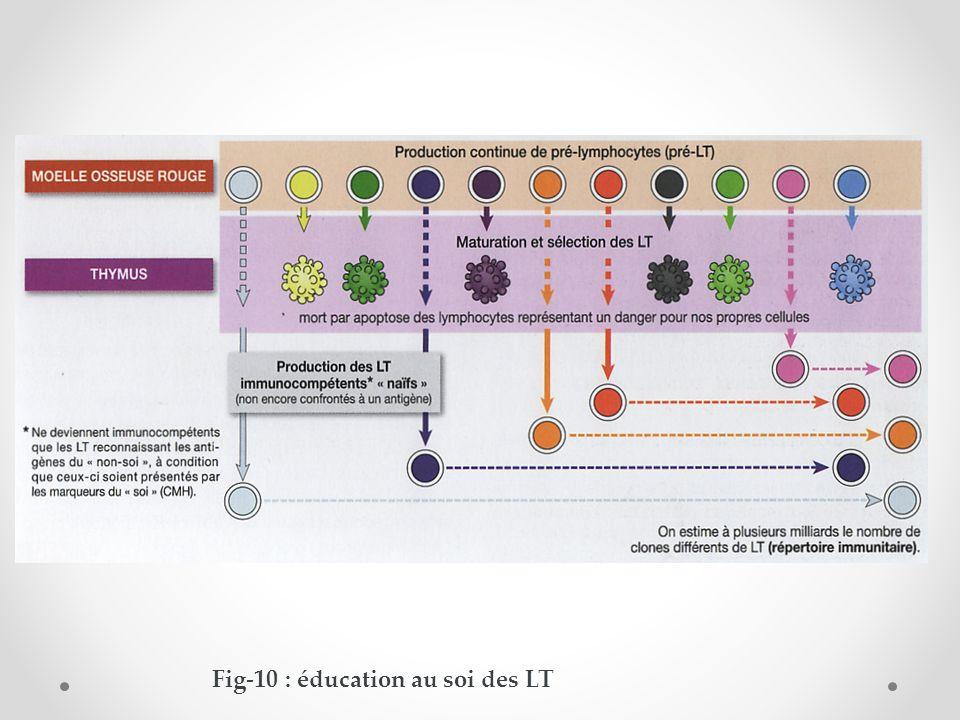 Fig-10 : éducation au soi des LT
