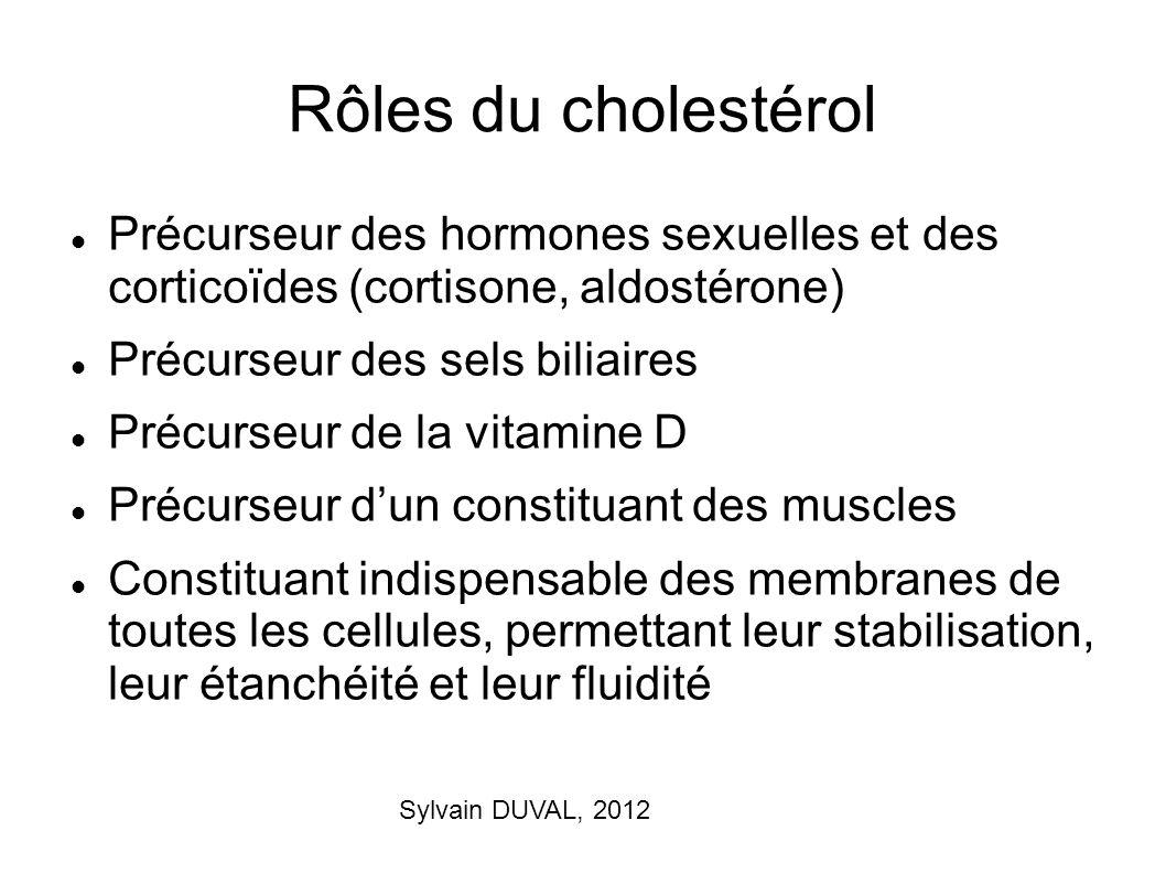 Rôles du cholestérol Précurseur des hormones sexuelles et des corticoïdes (cortisone, aldostérone)
