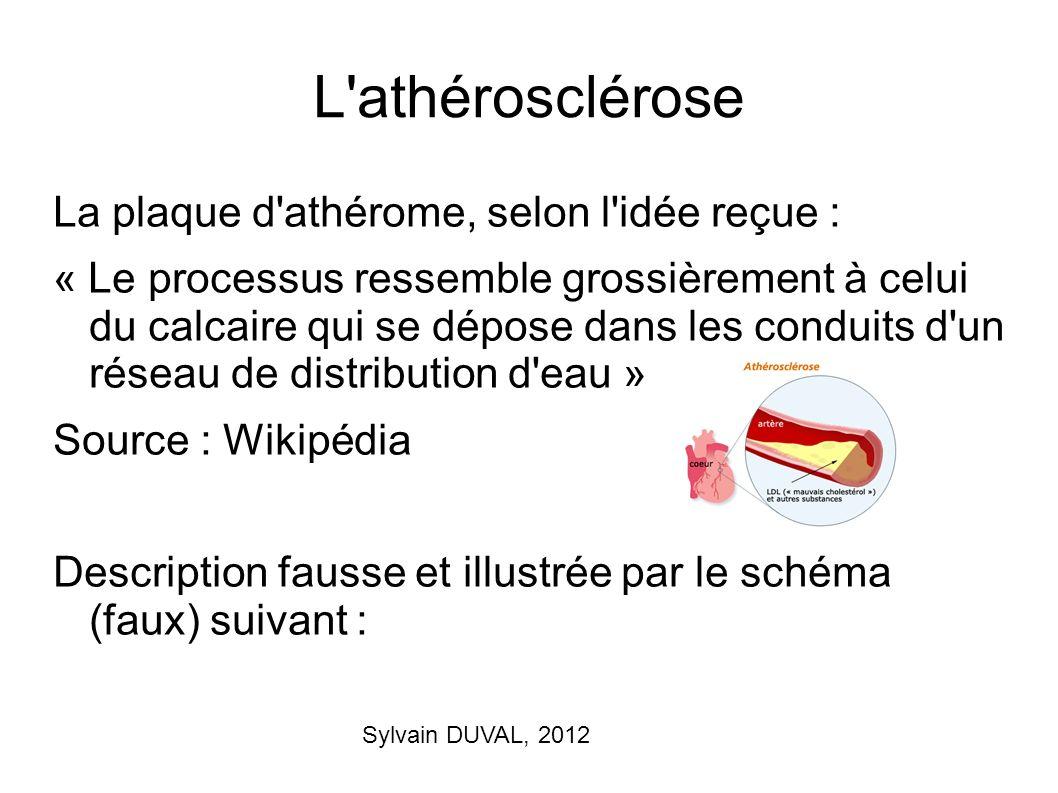 L athérosclérose La plaque d athérome, selon l idée reçue :