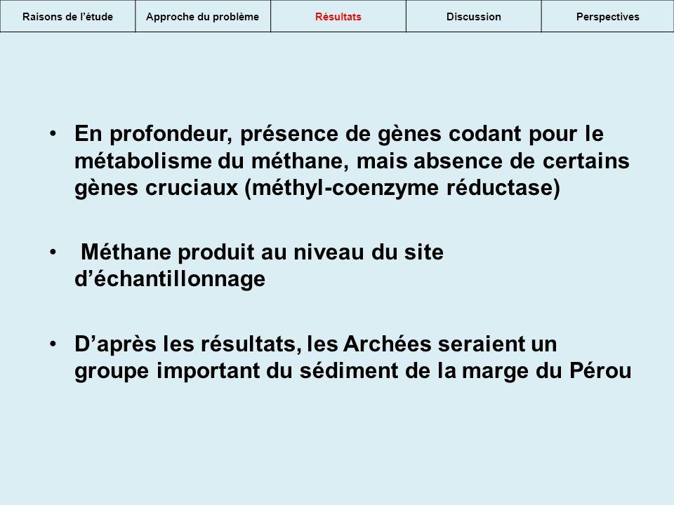 Méthane produit au niveau du site d'échantillonnage
