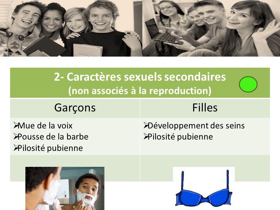 2- Caractères sexuels secondaires (non associés à la reproduction)