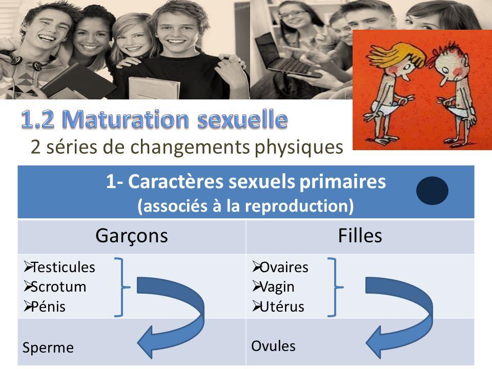 1- Caractères sexuels primaires (associés à la reproduction)