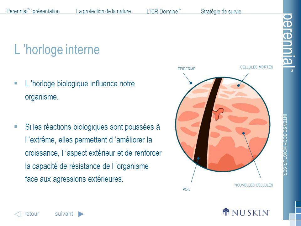 L 'horloge interne L 'horloge biologique influence notre organisme.