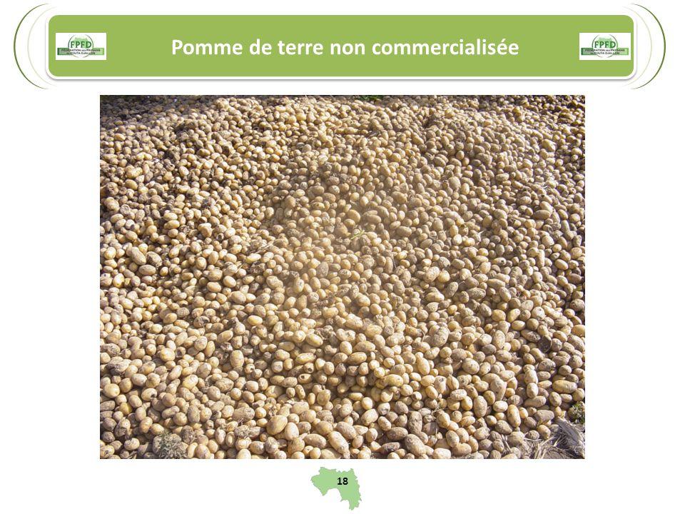 Pomme de terre non commercialisée