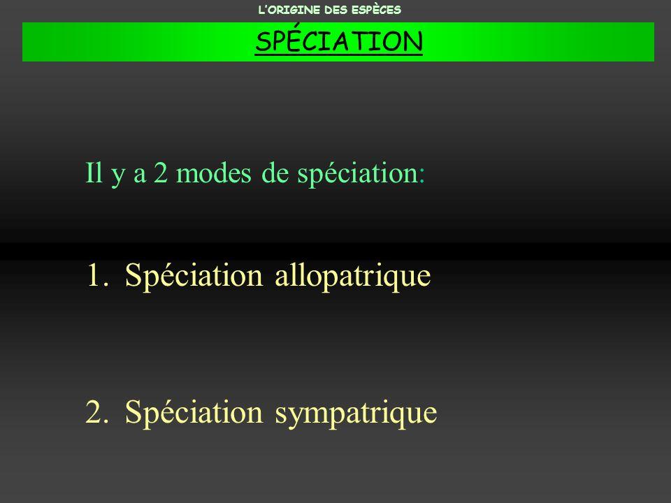Spéciation allopatrique