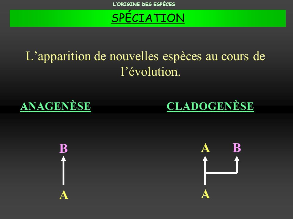 L'apparition de nouvelles espèces au cours de l'évolution.