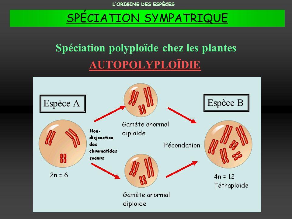 Spéciation polyploïde chez les plantes