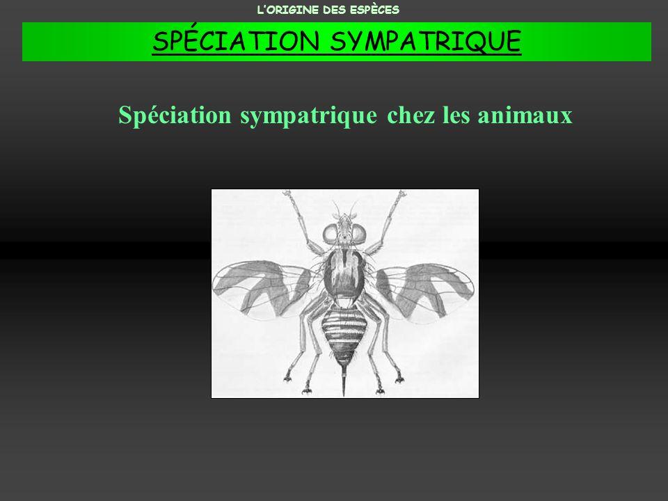 Spéciation sympatrique chez les animaux
