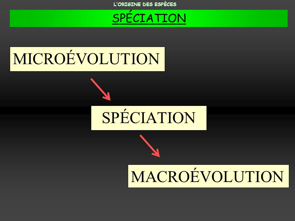 MICROÉVOLUTION SPÉCIATION MACROÉVOLUTION SPÉCIATION