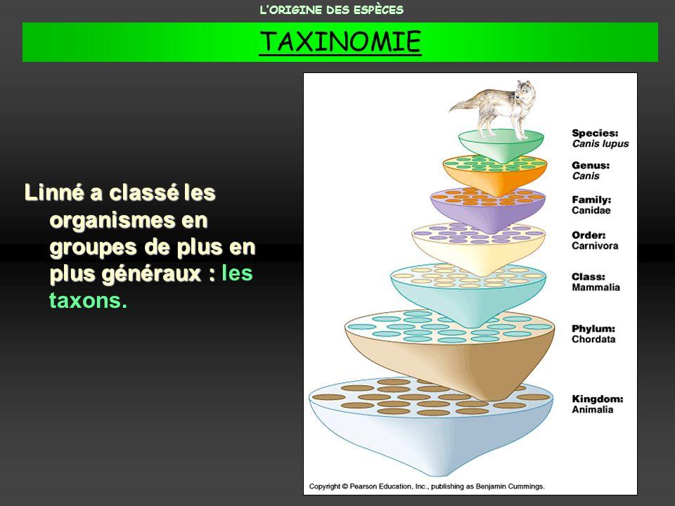 L'ORIGINE DES ESPÈCES TAXINOMIE.