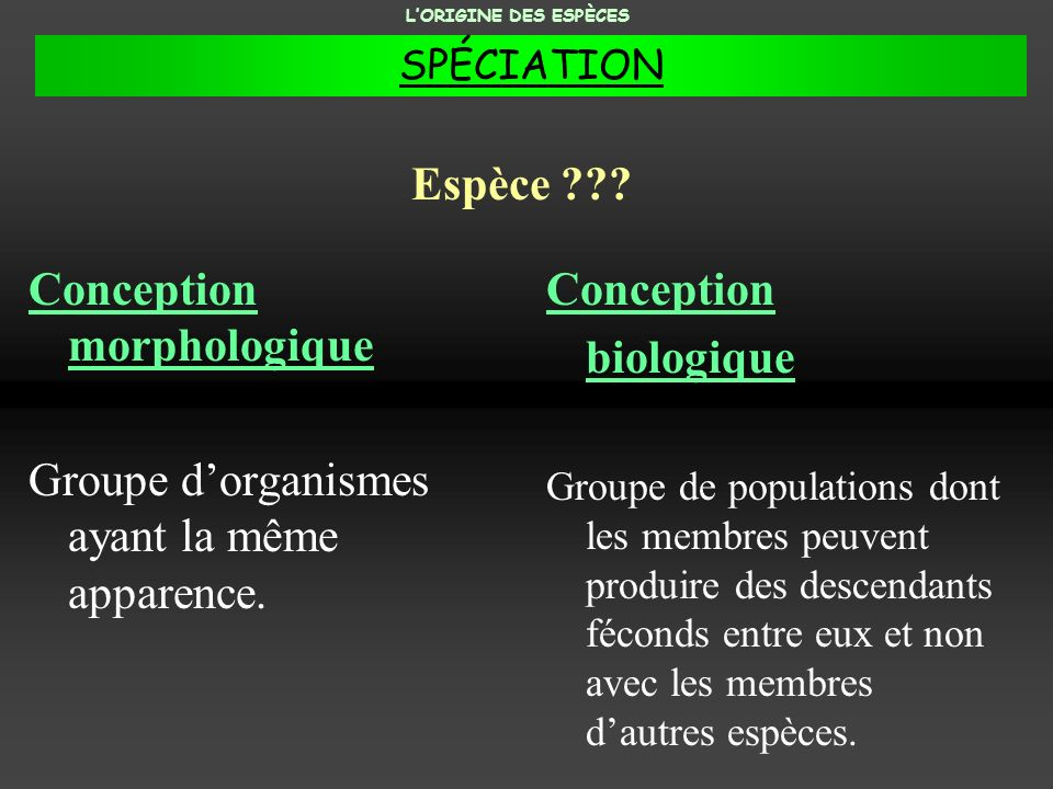 Conception morphologique