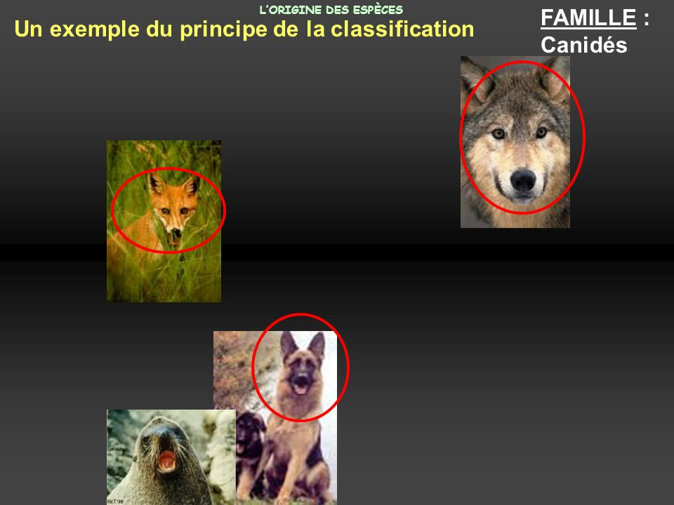 Un exemple du principe de la classification