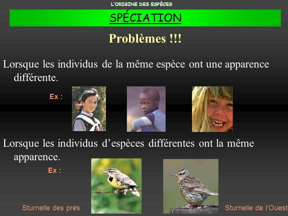 L'ORIGINE DES ESPÈCES SPÉCIATION. Problèmes !!! Lorsque les individus de la même espèce ont une apparence différente.