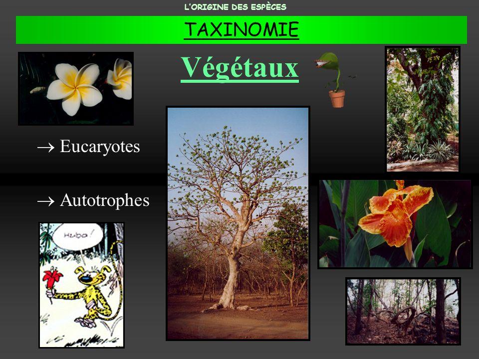 L'ORIGINE DES ESPÈCES TAXINOMIE Végétaux Eucaryotes Autotrophes