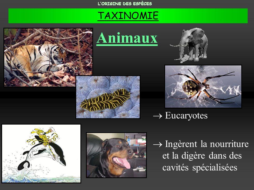 Animaux TAXINOMIE Eucaryotes