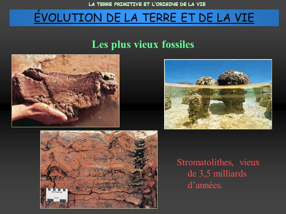 Les plus vieux fossiles