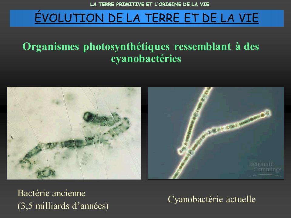 Organismes photosynthétiques ressemblant à des cyanobactéries