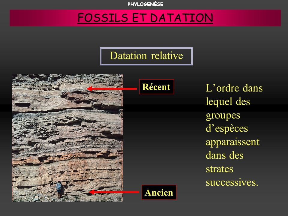 FOSSILS ET DATATION Datation relative