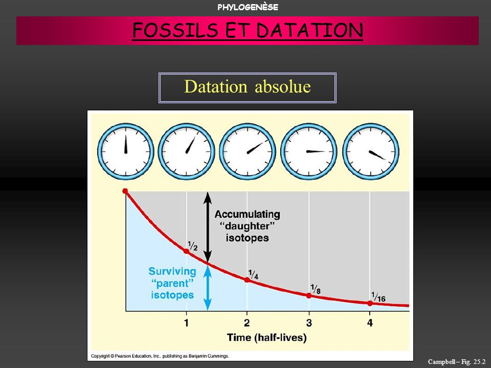 PHYLOGENÈSE FOSSILS ET DATATION Datation absolue Campbell – Fig. 25.2