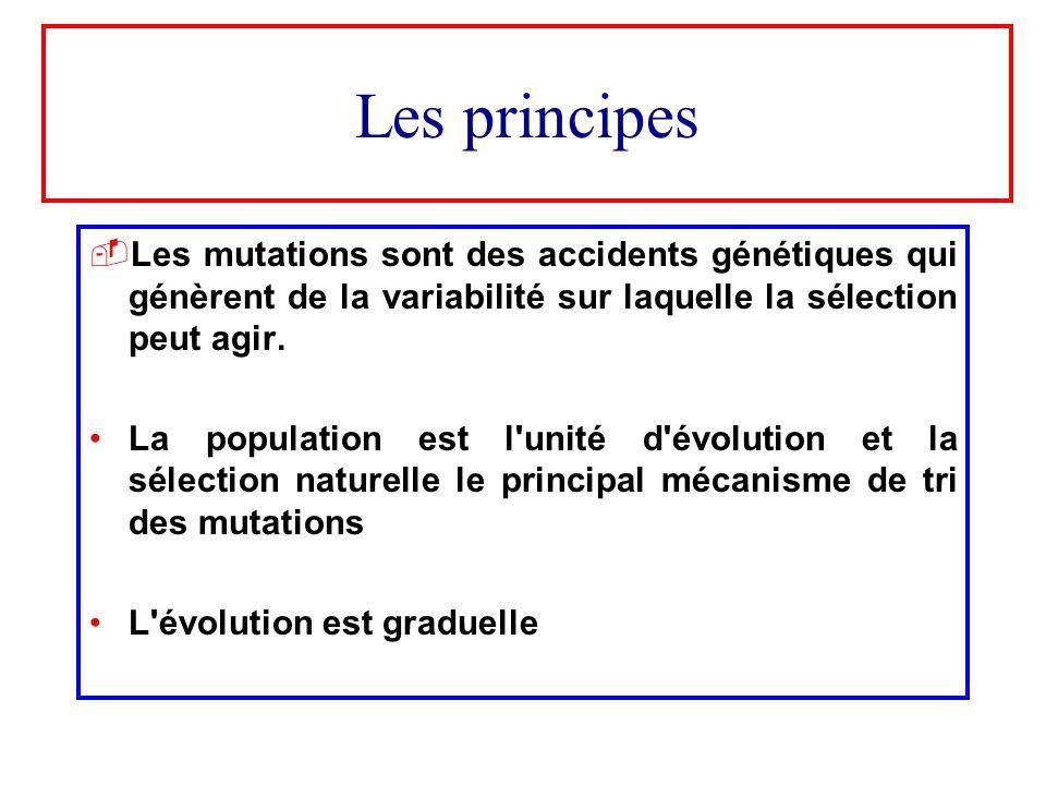 Les principes Les mutations sont des accidents génétiques qui génèrent de la variabilité sur laquelle la sélection peut agir.