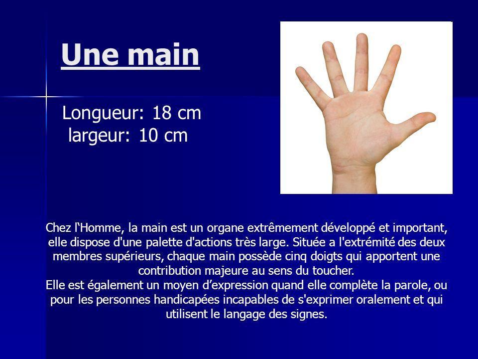 Une main Longueur: 18 cm largeur: 10 cm