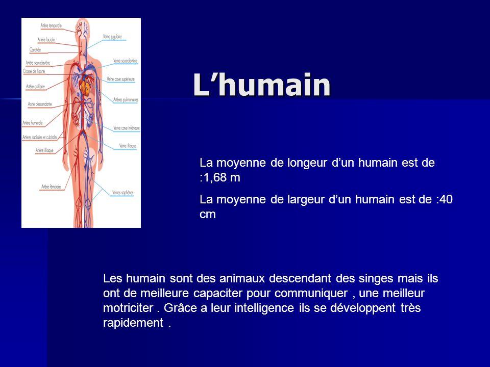 L'humain La moyenne de longeur d'un humain est de :1,68 m