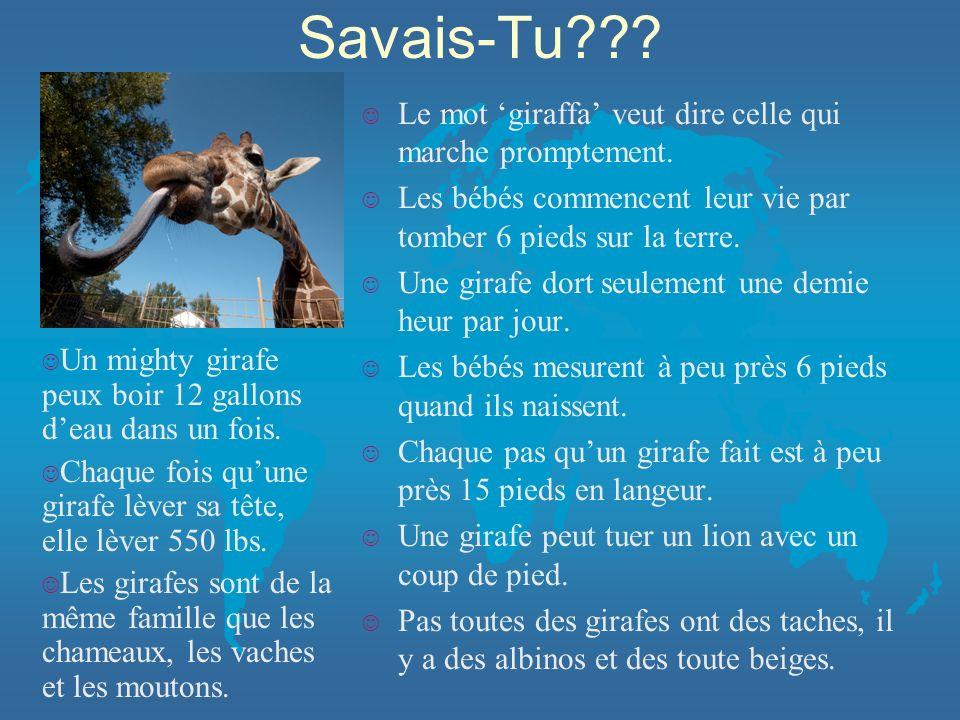 Savais-Tu Le mot 'giraffa' veut dire celle qui marche promptement.