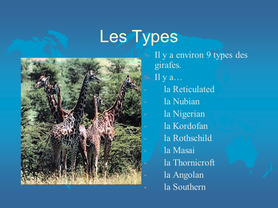 Les Types Il y a environ 9 types des girafes. Il y a… la Reticulated